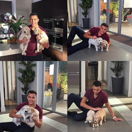 alexis sanchez dogs