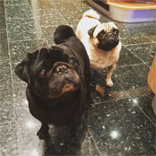 Coutinho chills out with his pet pugs