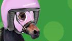Horse racing betting tips: Get 9/1 enhanced odds on Faugheen and Douvan