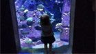 Henderson brings his daughter to aquariam